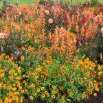 Pflanzung - Bunte Blumen