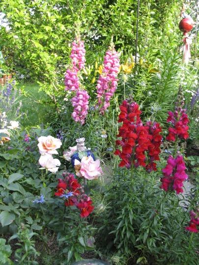 Pflanzung - rote Blumen